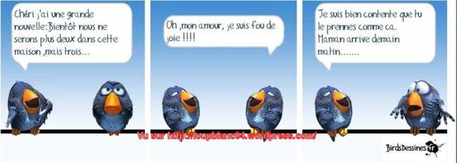 Birds-3_04