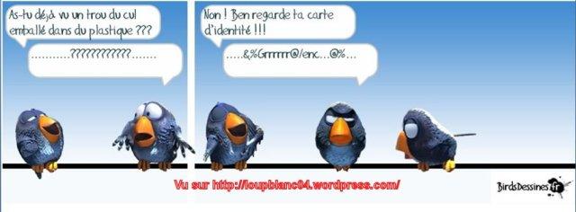 Birds-3_05