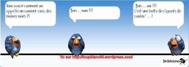 Birds-3_08