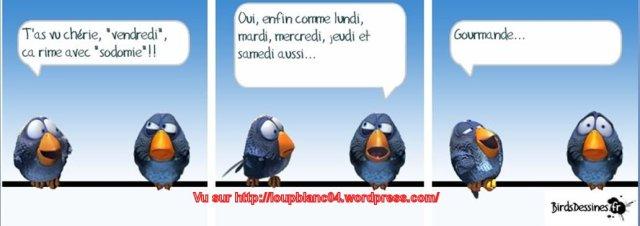 Birds-3_10