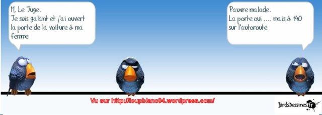 Birds-3_24