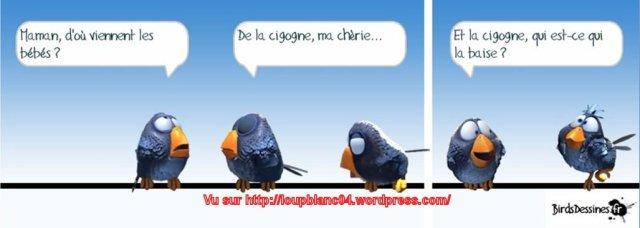 Birds-3_27