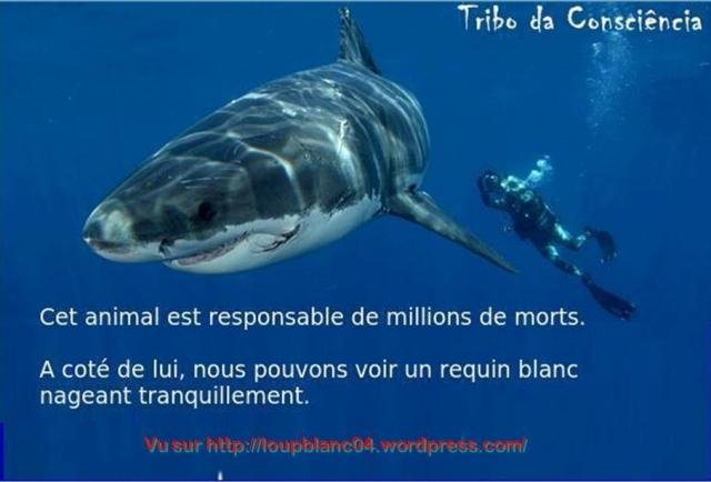 Requin-Homme 2