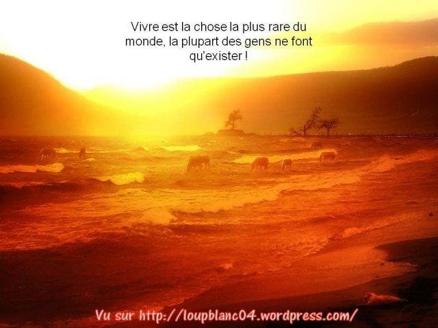 Crier la Vie_018