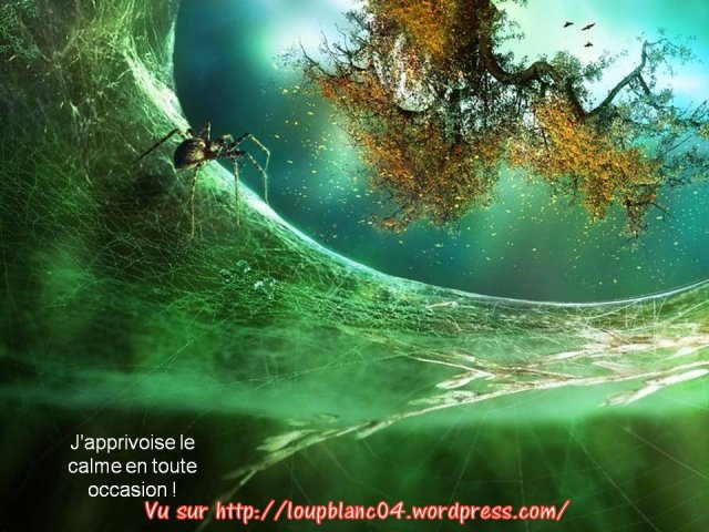 Crier la Vie_025