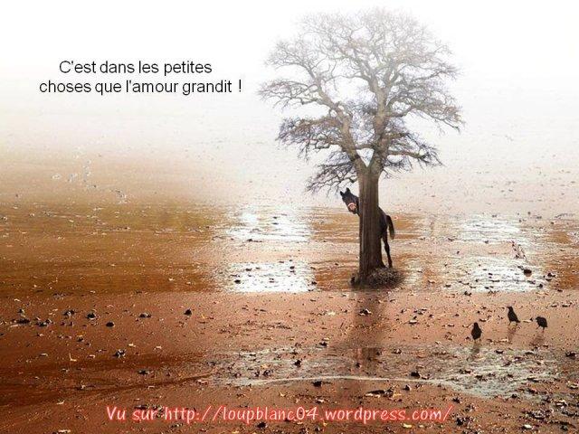 Crier la Vie_032