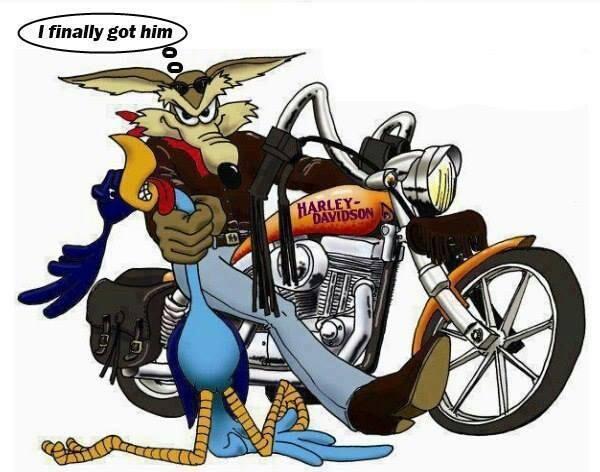 Bip-Bip & Coyote-Harley