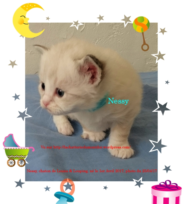 170425-RPM0207-Nessy