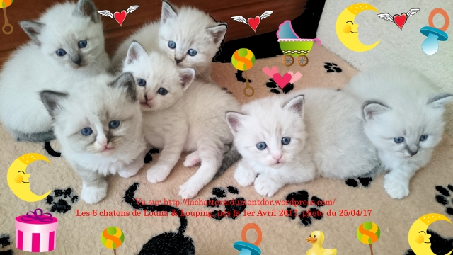 170425-RPM0217-6Chatons