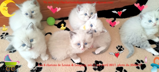 170425-RPM0219-6Chatons