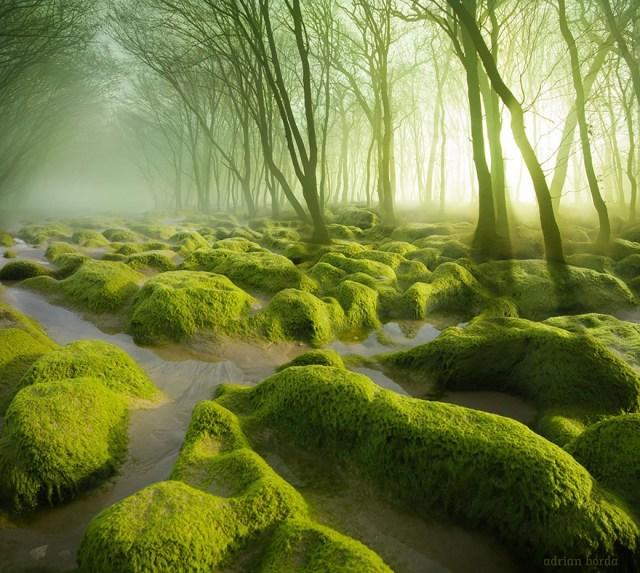 Marais de Mousse Verte