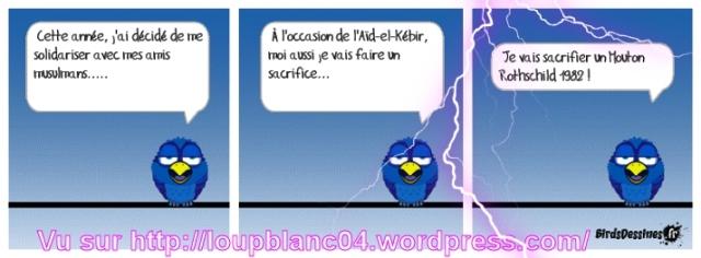 01 birds 01