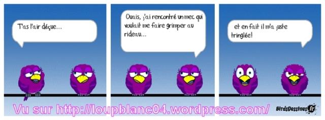 03 birds 03