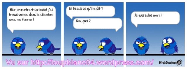 05 birds 05