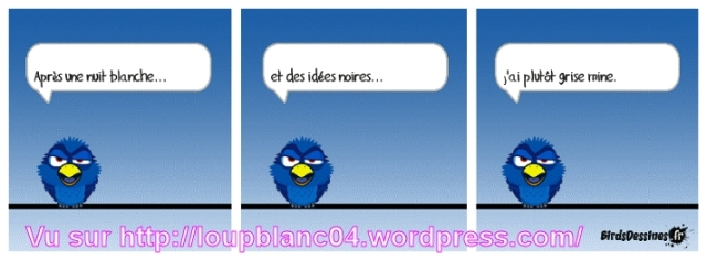09 birds 09