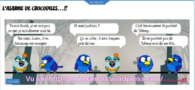 Birds-Johnny a