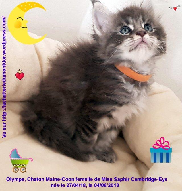 20180604_174247_003 Olympe
