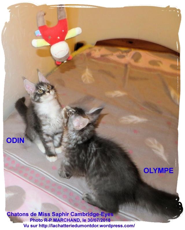 20180730-ODIN & OLYMPE_0045