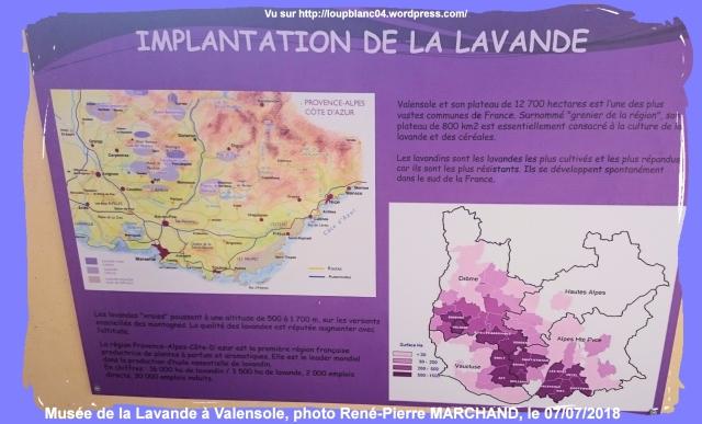 LB20180707-RPM_Lavandes-01_019