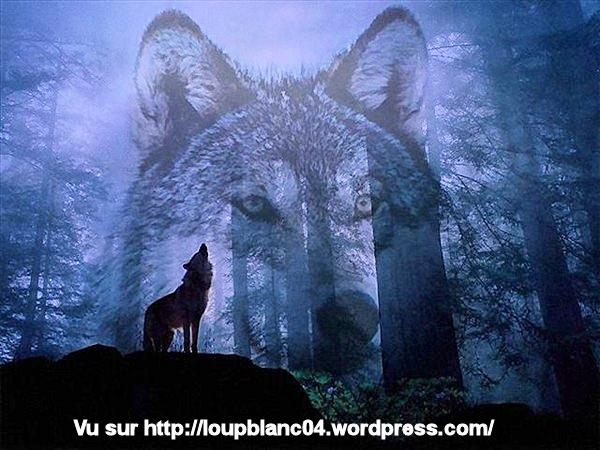 Loup dans le bois et songe